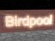創作者 birdpool 的頭像