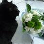 blissmycat