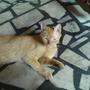 cat11227