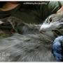 cat770128