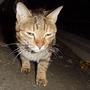 睏貓CatNap