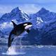 創作者 龜山島賞鯨報名 的頭像