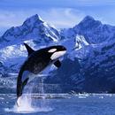 龜山島賞鯨報名 圖像