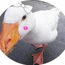 黃小鴨 圖像
