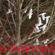 創作者 cucurucucu 的頭像