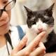 創作者 朵啡貓咪幸福屋 的頭像