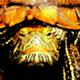 創作者 龜X兔 的頭像