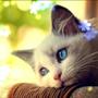 名叫愛爾莎的貓咪