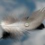 featherain