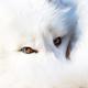 創作者 fox9 的頭像