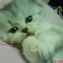 Gimi 小帥貓