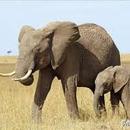 信保基金貸款申請 圖像