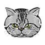 貓咪-小豆子
