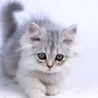 kitty522