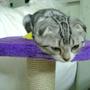 kitty889
