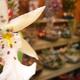 創作者 高雄市代客送花 的頭像