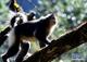 創作者 信用卡現金回饋 的頭像