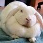 肥兔子(ノ≧∀≦)ノ