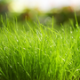 小Grass
