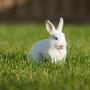 想吃小火鍋的兔