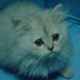 ottocat