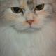 創作者 三色波斯貓 的頭像