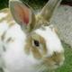 創作者 rabbit625 的頭像