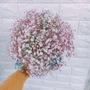 粉藍星上的種子