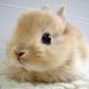 創作者 迷你小兔 的頭像