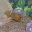 smallsmallfish