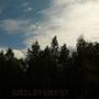 smileforest